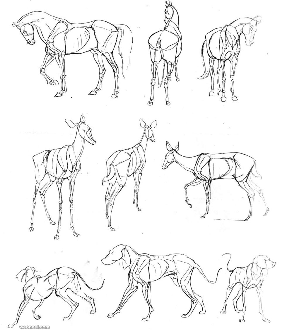 how to draw a deer how to draw a deer for kids drawingsforkidsnet a deer draw how to