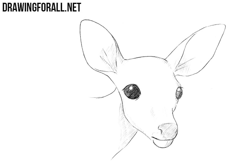 how to draw a deer how to draw a deer head drawingforallnet how deer a to draw