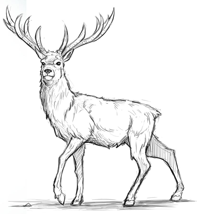 how to draw a deer how to draw a deer step by step for beginners deer draw to a how