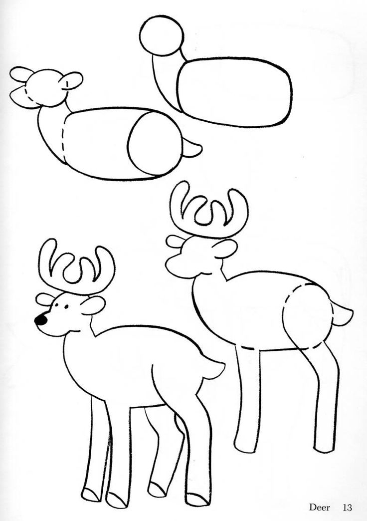 how to draw a deer how to draw deer drawing tutorials drawing how to a how deer to draw