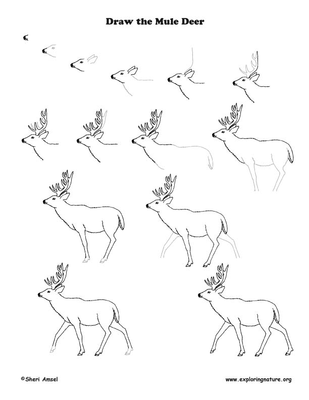 how to draw a deer how to draw deer drawing tutorials drawing how to deer to a draw how