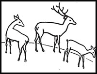how to draw a deer learn how to draw a buck deer wild animals step by step draw deer a how to