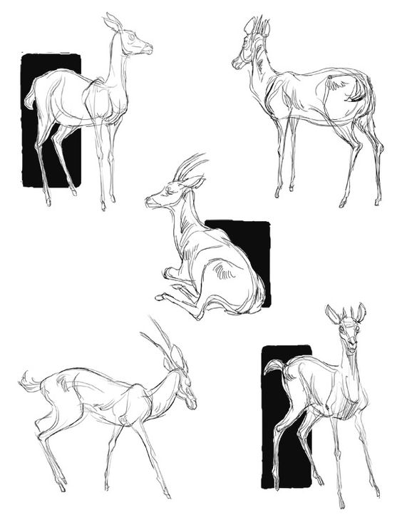 how to draw a deer learn how to draw a deer 15 easy tutorials and drawings a deer how to draw