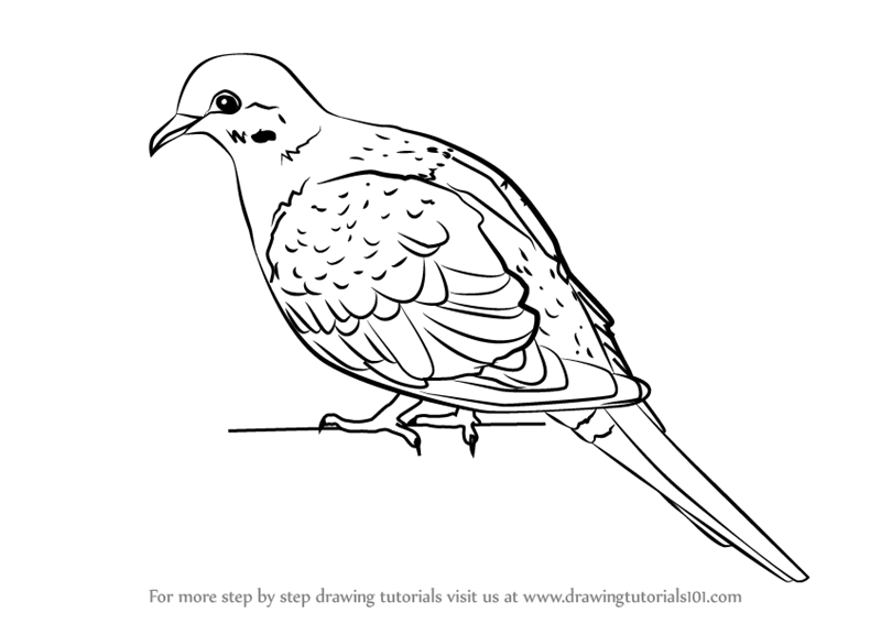 how to draw a dove easy how to draw a dove easy how easy a dove draw to