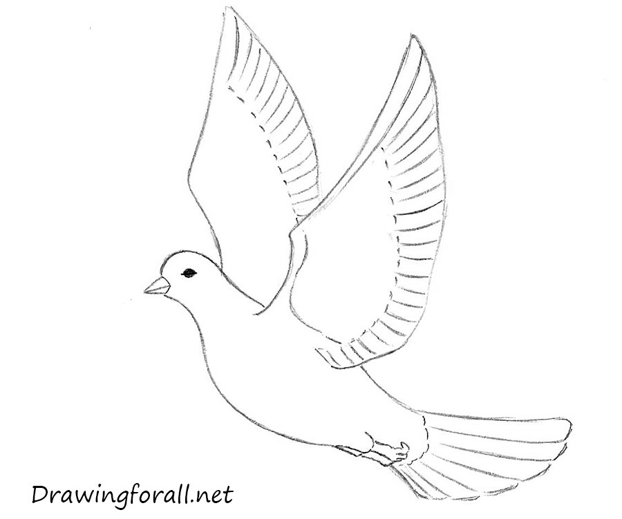 how to draw a dove easy how to draw a dove for beginners drawingforallnet to how draw a easy dove