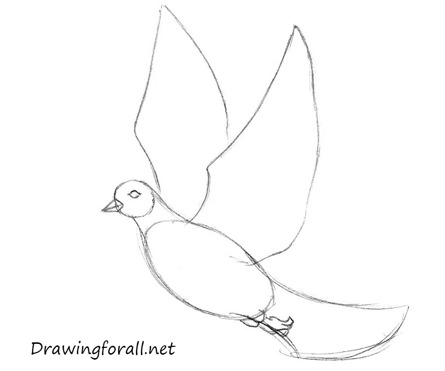 how to draw a dove easy how to draw a dove step by step easy animals 2 draw draw a to easy dove how