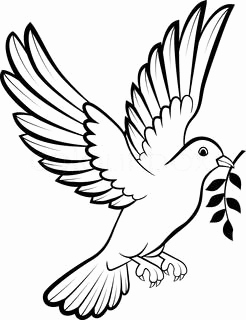 how to draw a dove easy learn how to draw a rain dove birds step by step to easy how a dove draw