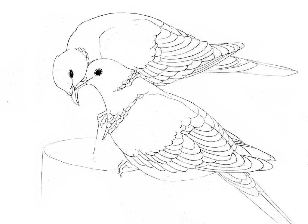 how to draw a dove easy realistic dove drawing free download on clipartmag to how a easy draw dove