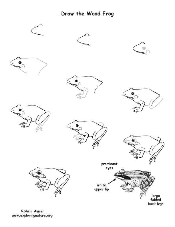 how to draw a frog face free colouring pages for adults frog google search face frog draw to a how