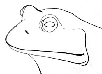 how to draw a frog face frog face drawing at paintingvalleycom explore frog face how a to draw