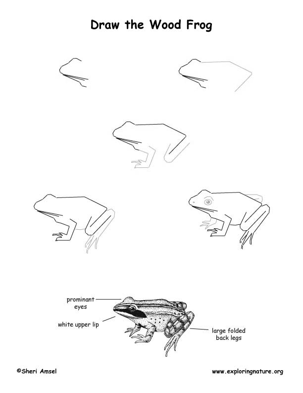 how to draw a frog face how to draw a frog frog draw face a how to
