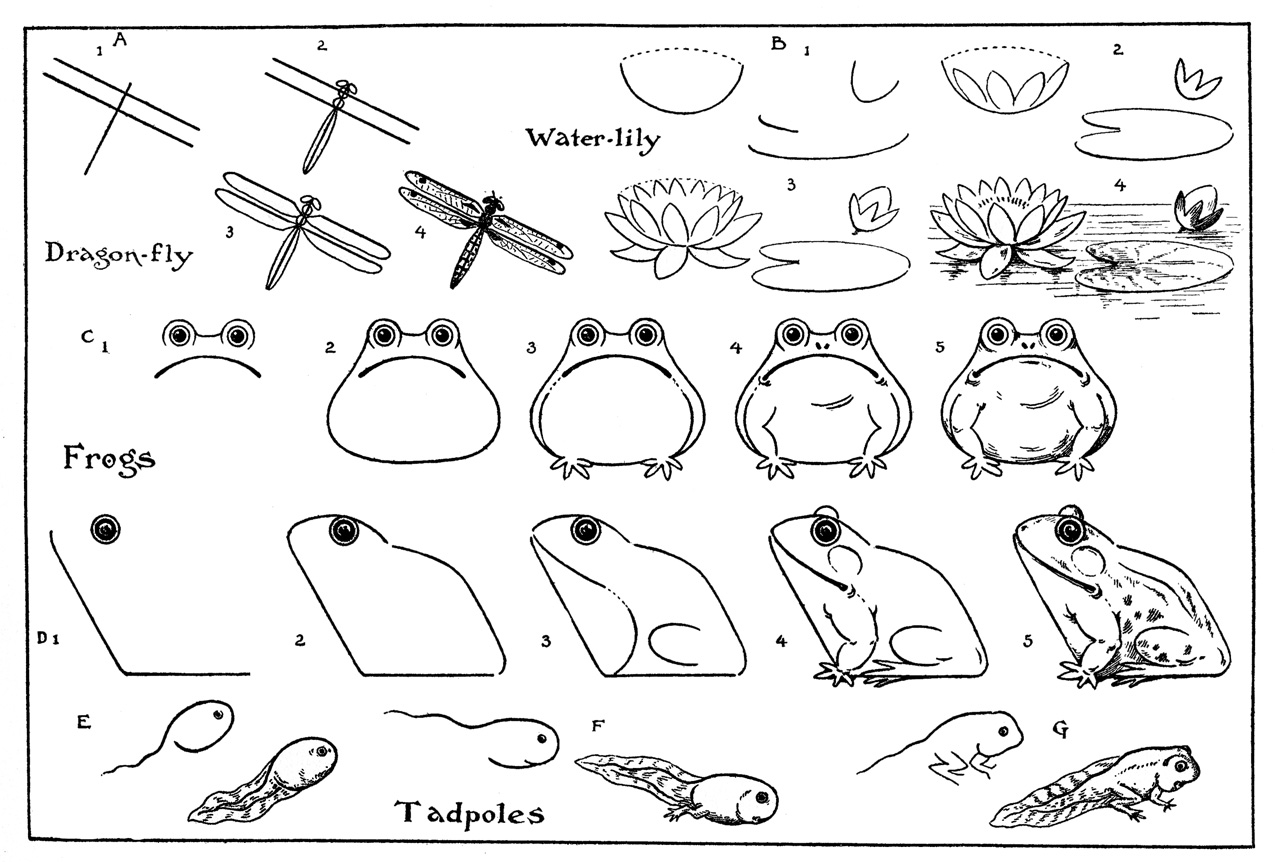 how to draw a frog face mrs griffin39s cool class frog life cycles face draw frog how a to