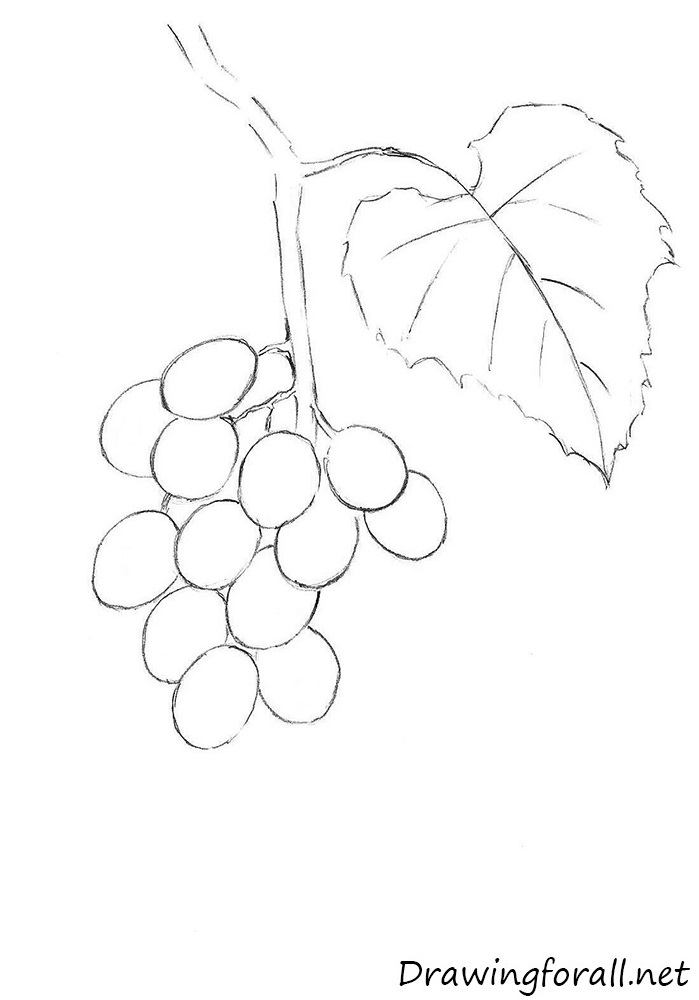 how to draw a grape coloring pages of grapes in a vine in 2020 grape drawing to grape how draw a