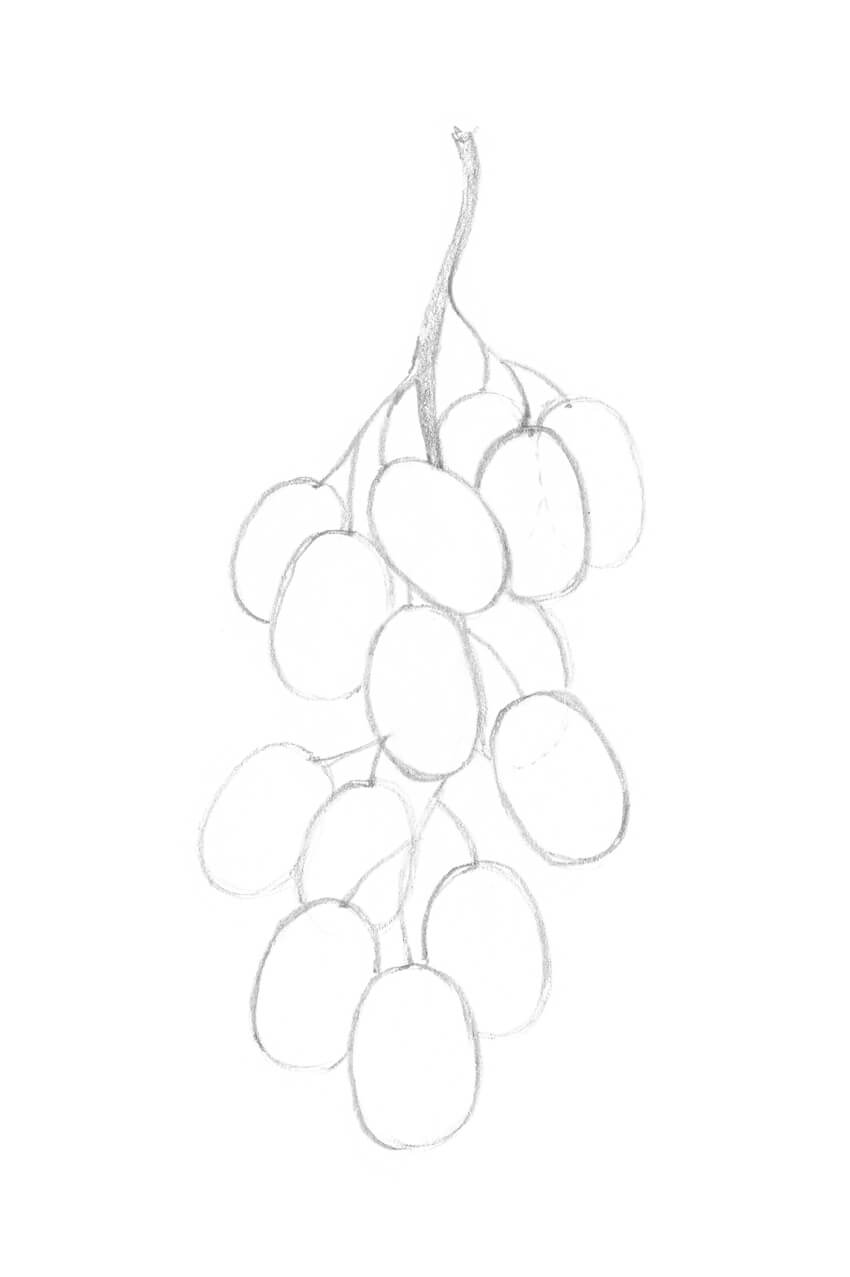 how to draw a grape download premium illustration of hand drawn fresh grapes grape a how to draw