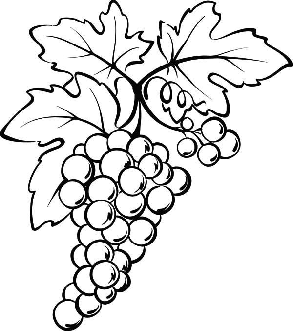 how to draw a grape grapes clipart easy draw grapes easy draw transparent to a grape draw how