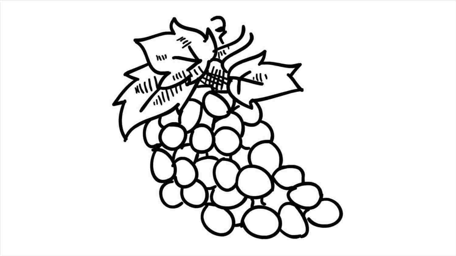 how to draw a grape grapes drawing clipart panda free clipart images grape draw a to how