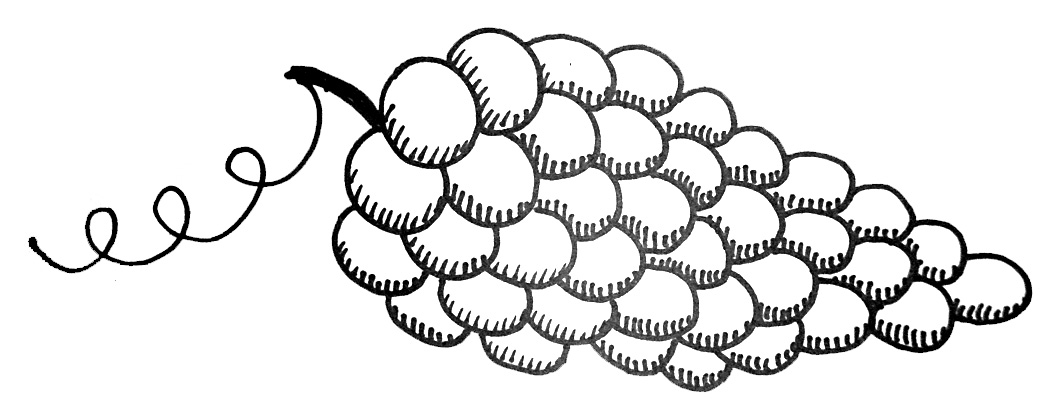 how to draw a grape grapes drawing clipartsco to a draw how grape