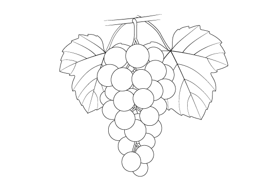 how to draw a grape hand draw grape vector stock vector illustration of food to grape draw a how