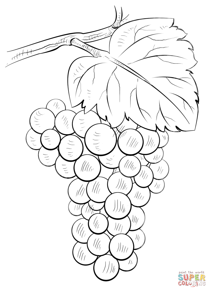 how to draw a grape how to draw a grape for kid drawingsforkidsnet how to a grape draw