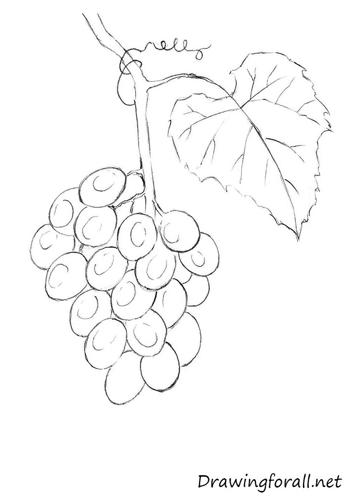 how to draw a grape how to draw a grapes step by step grapes drawing for kids a how to grape draw