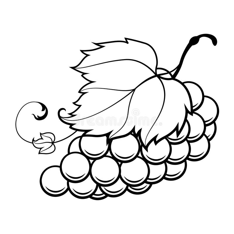 how to draw a grape sketch grapes at paintingvalleycom explore collection draw to how grape a
