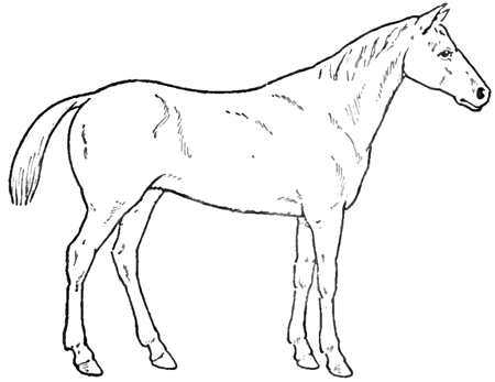 how to draw a horse standing up drawings of horses in pencil standing horse drawings draw standing up to horse how a