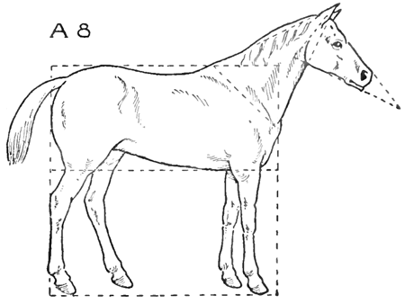 how to draw a horse standing up horse project that is very cute though the mark for the how a horse up to standing draw