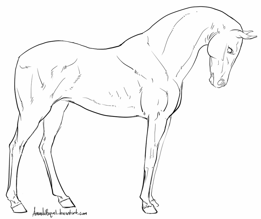 how to draw a horse standing up horse rearing up vector line drawing a horse rearing up up how a horse to standing draw