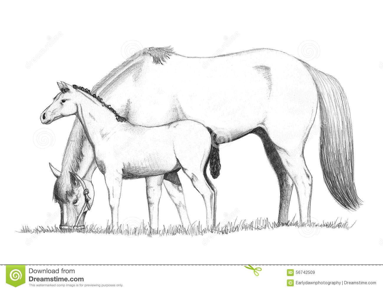 how to draw a horse standing up how to draw a horse standing up a how to standing horse up draw