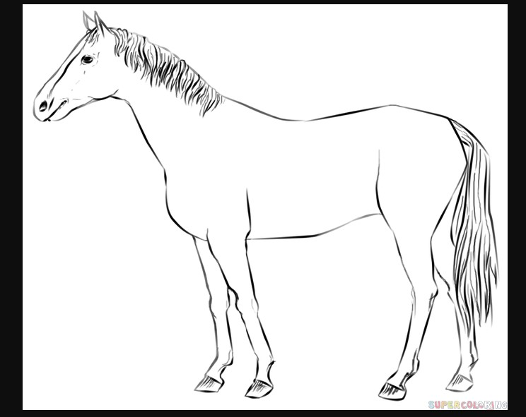 how to draw a horse standing up how to draw a horse the new yorker horse a how standing draw up to