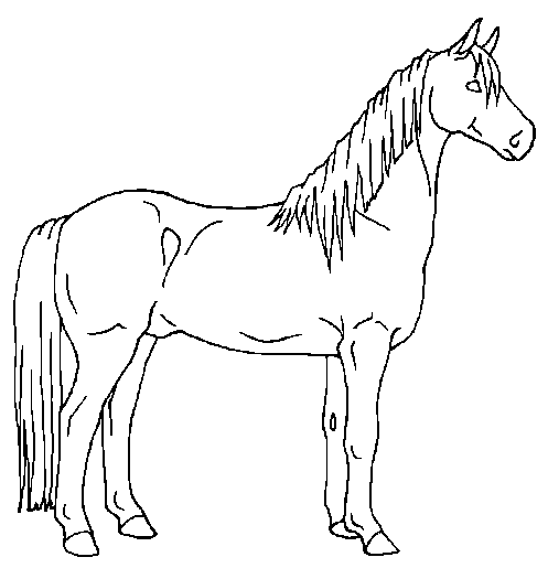 how to draw a horse standing up how to draw a horse tutorials that beginners should check out standing a how draw horse up to