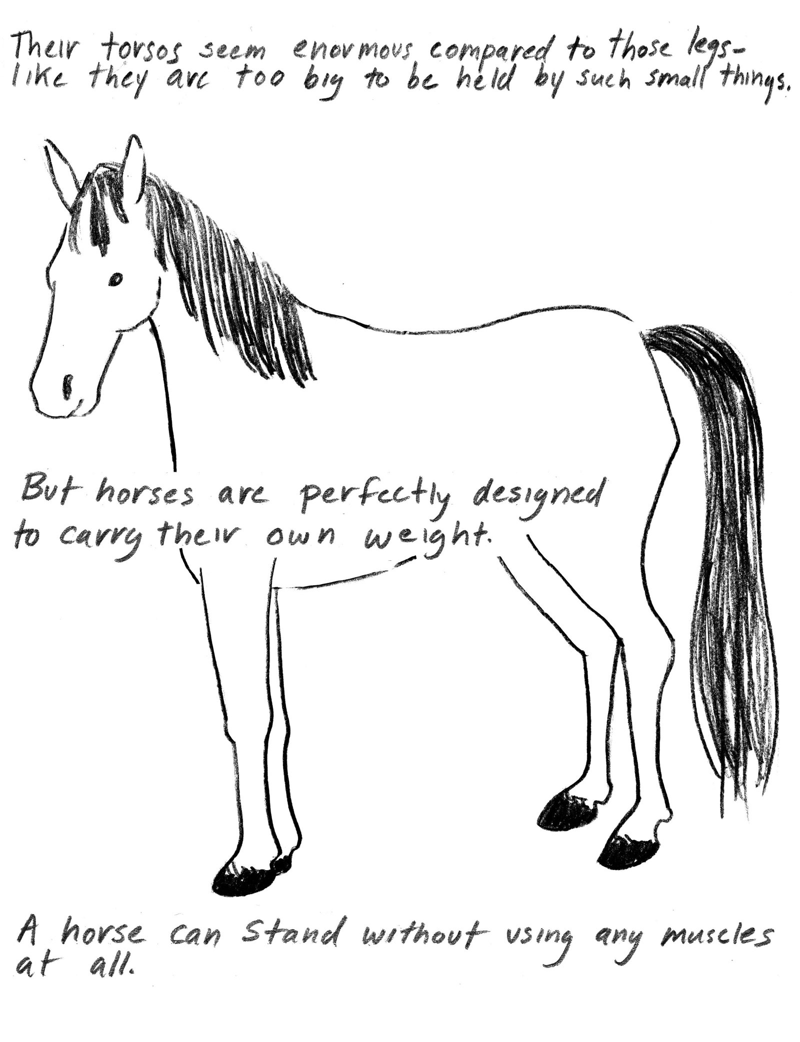 how to draw a horse standing up how to draw horses with easy step by step drawing lessons horse up to draw how a standing