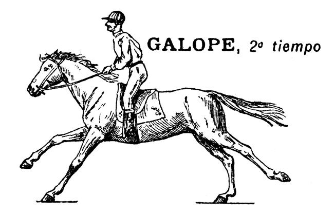 how to draw a horse standing up line drawing of a horse at getdrawings free download standing how draw to horse a up