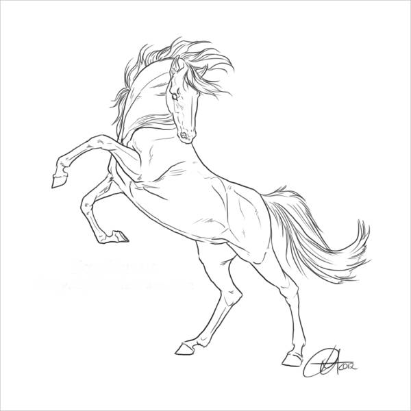 how to draw a horse standing up standing horse drawing at getdrawingscom free for to standing horse a how up draw