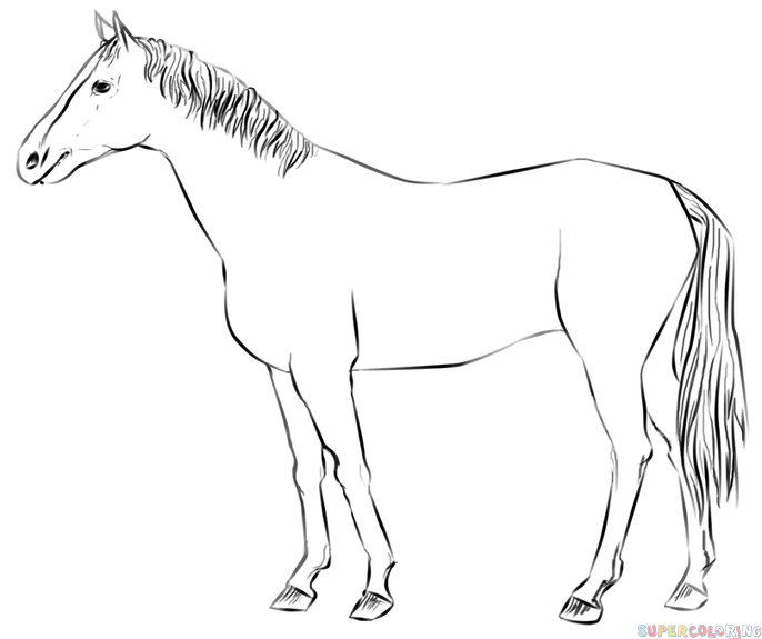how to draw a horse standing up standing horse line art by exotic011 on deviantart how horse a up draw to standing