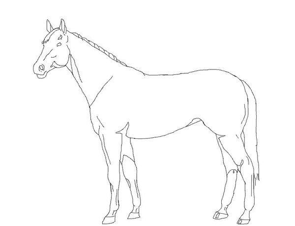 how to draw a horse standing up white horse rearing on hind hoof sketch portrait white horse how draw a standing to up