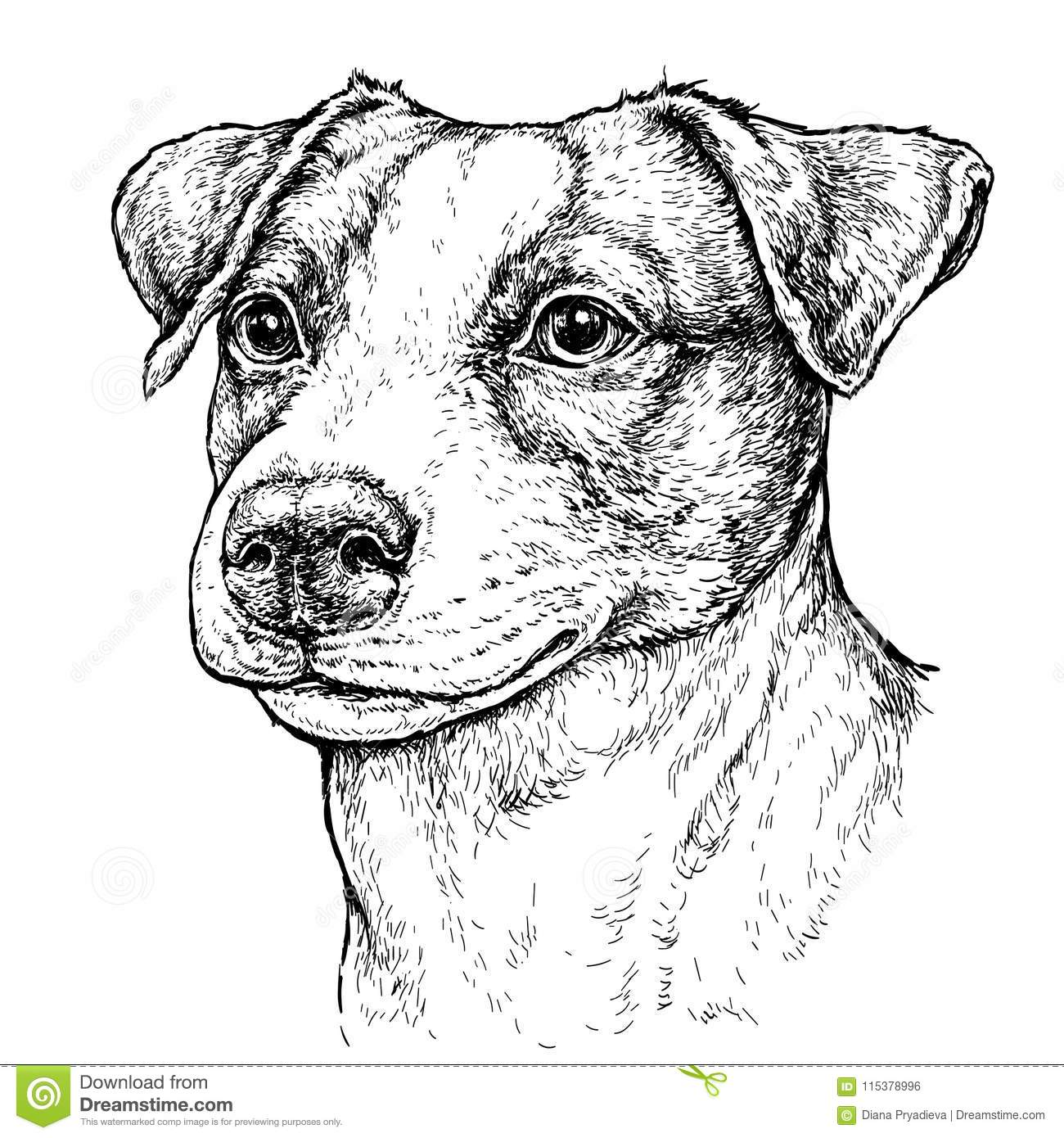 how to draw a jack russell 63a2 isaac the jack russell drawspace jack russell draw a how to