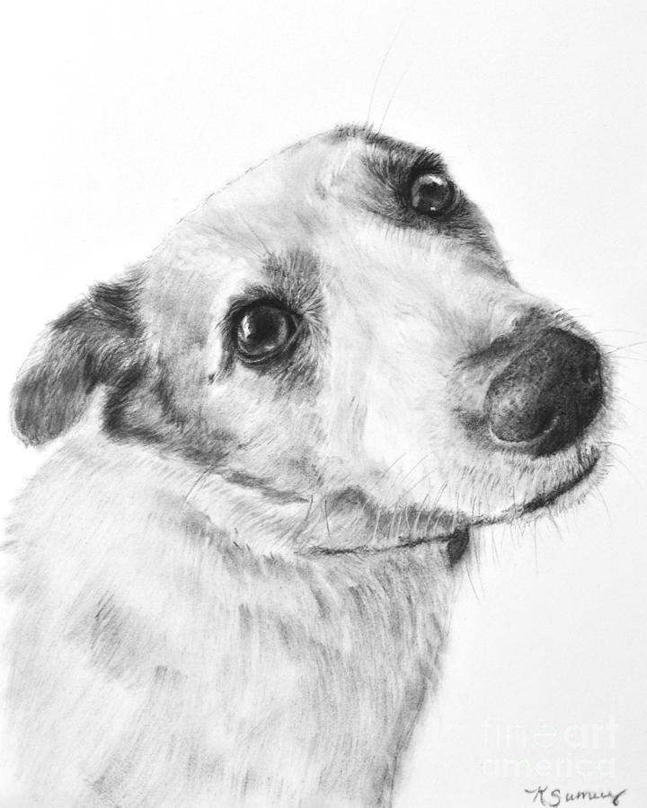 how to draw a jack russell billy by kris knavedeviantartcom on deviantart animal draw a to how jack russell
