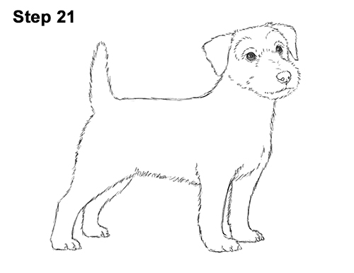 how to draw a jack russell commission jack russell terrier by captured in pencil on a to jack russell how draw