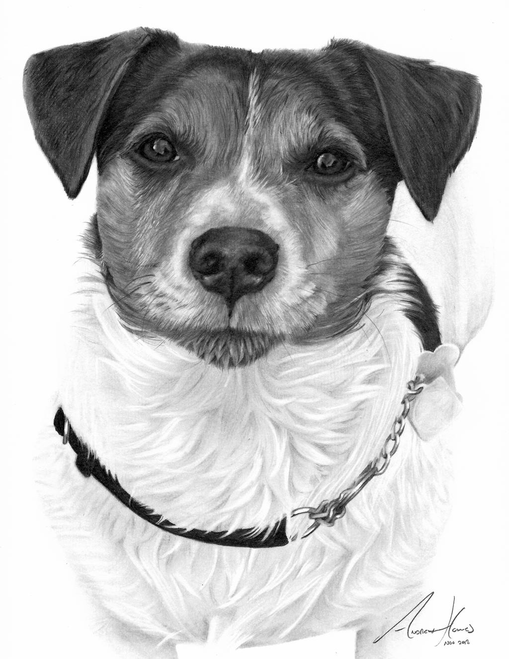 how to draw a jack russell d f russell to draw a how jack