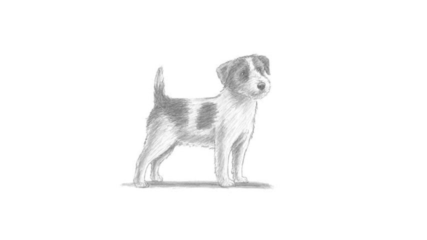 how to draw a jack russell how to draw a dog jack russell terrier russell draw jack a to how