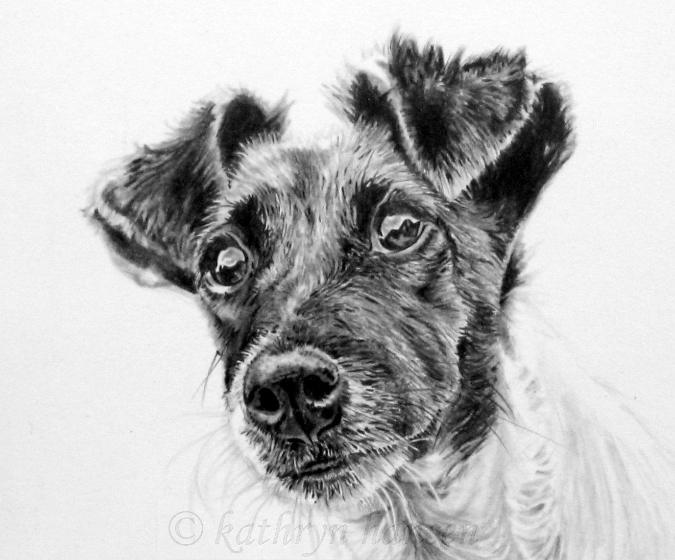 how to draw a jack russell how to draw a jack russell how to a jack draw russell