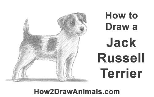 how to draw a jack russell how to draw a jack russell terrier step by step drawing a russell jack draw how to