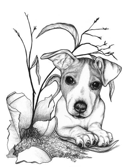 how to draw a jack russell jack russell terrier giclee print by mike sibley dog jack how russell draw a to
