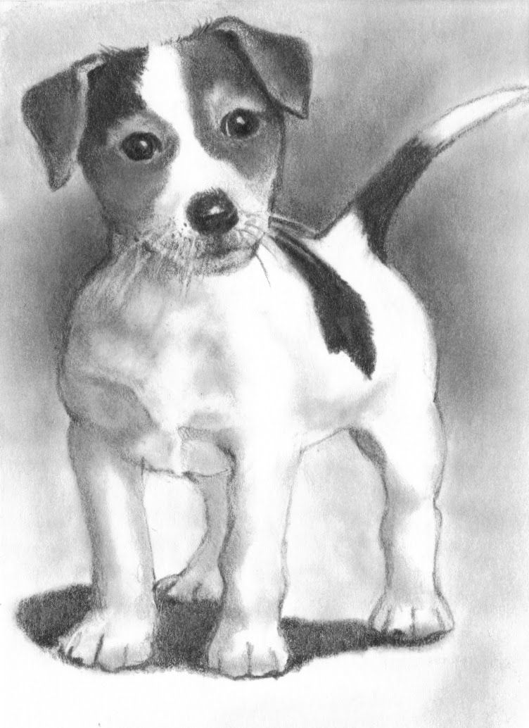how to draw a jack russell pencil drawing of a jack russell terrier by uk artist gary draw russell to how jack a