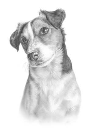 how to draw a jack russell realistic drawing terrier puppy google search animaux jack draw a russell how to