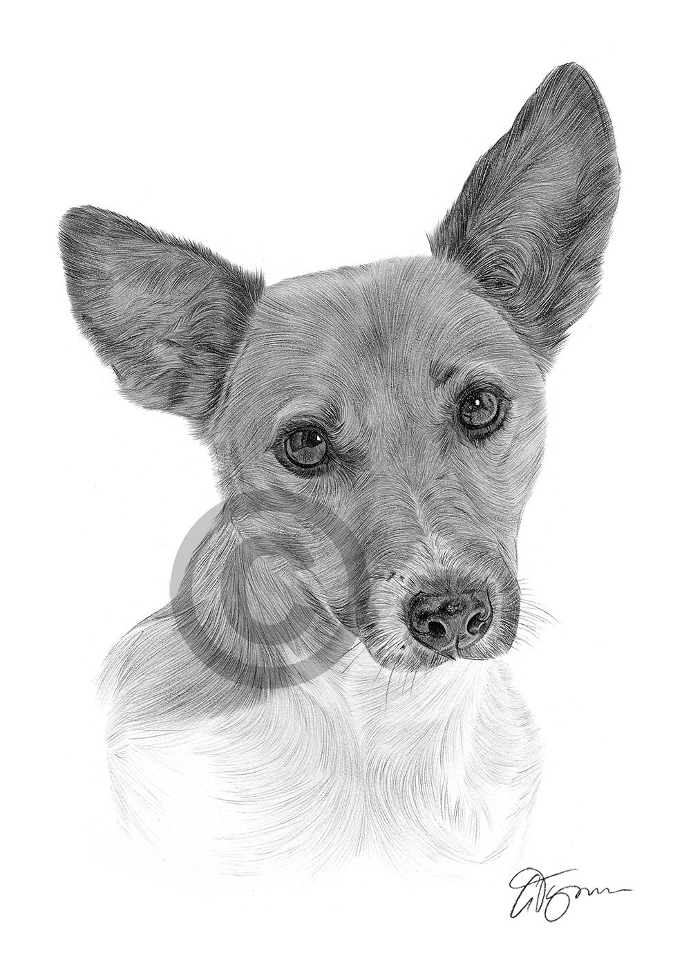 how to draw a jack russell the best how to draw a jack russell terrier step by step jack how draw to a russell