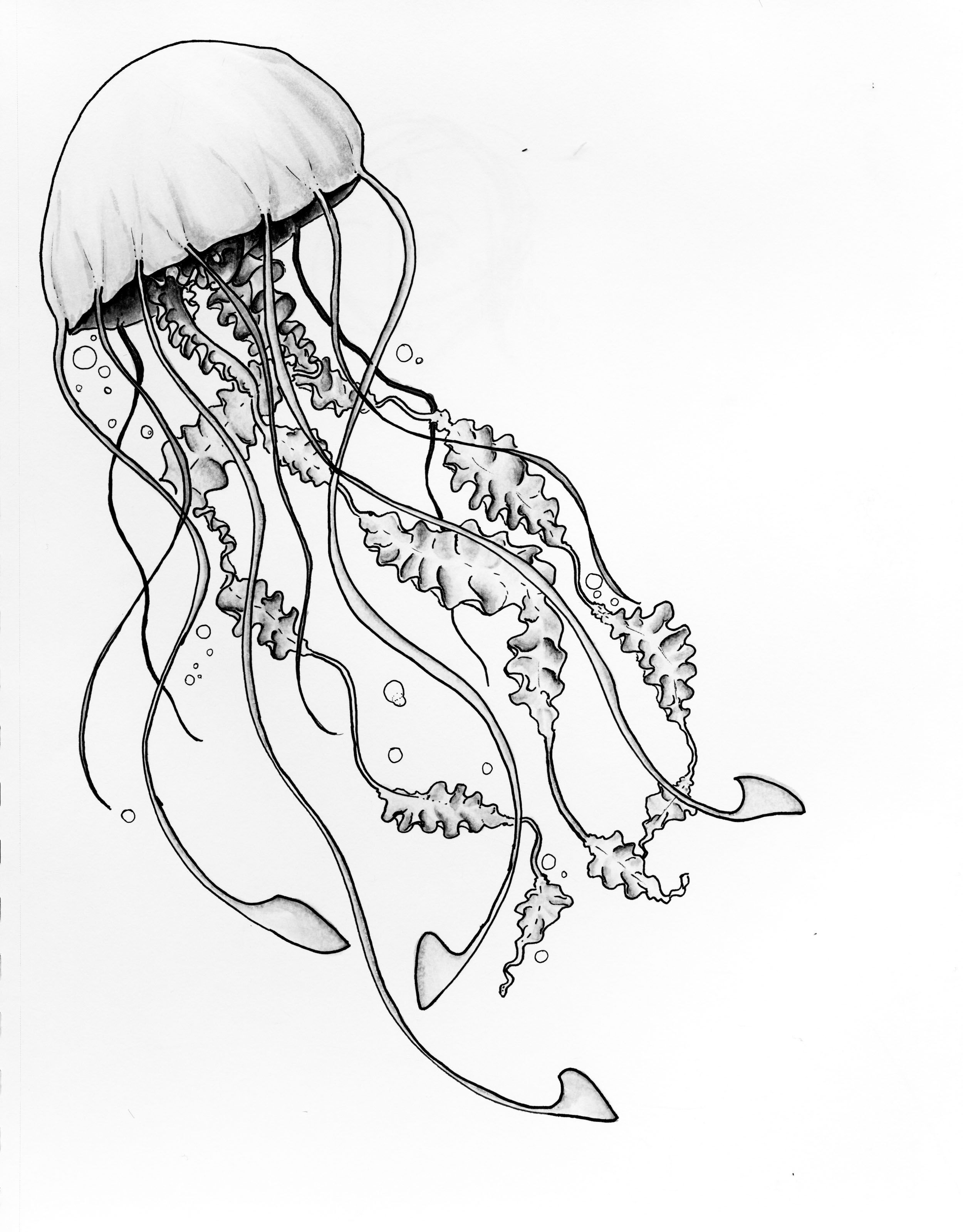 how to draw a jellyfish step by step easy simple jellyfish drawing jellyfish step step draw how by to a