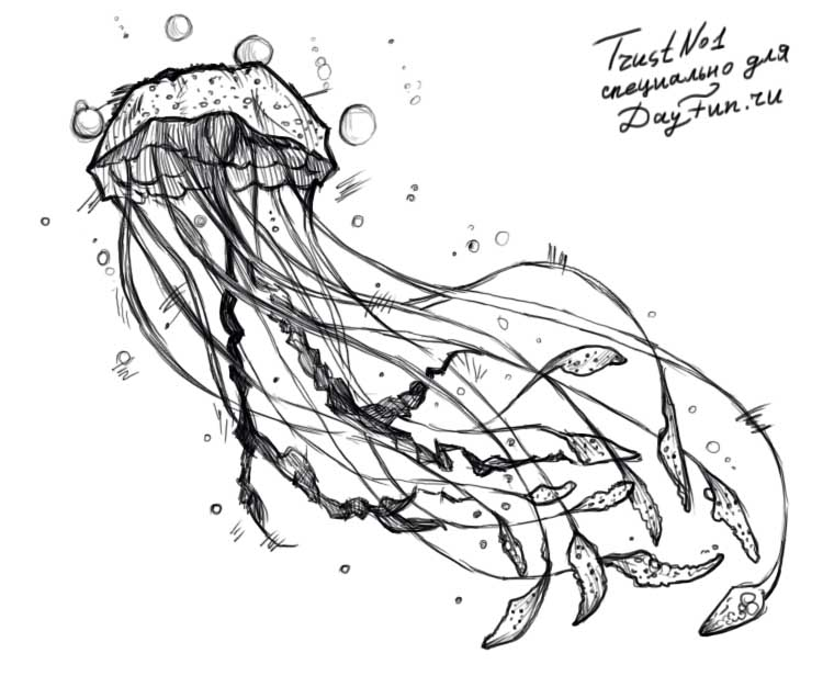 how to draw a jellyfish step by step how to draw a jellyfish drawingforallnet jellyfish to draw a step how step by