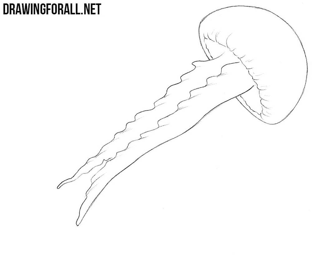 how to draw a jellyfish step by step how to draw a jellyfish drawingforallnet step step to by draw how a jellyfish